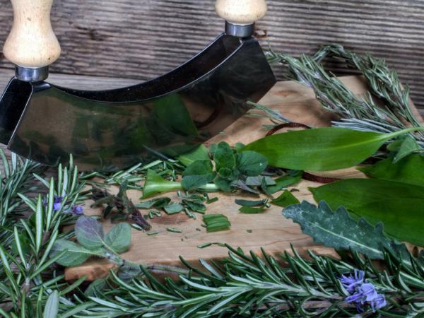 The Healing Power of Herbs